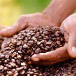 قهوه کشور ویتنام