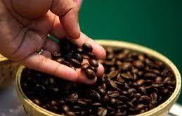 عرضه دانه قهوه مرغوب اندونزی
