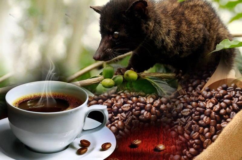 دانه قهوه کوپی لواک
