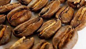 عرضه دانه قهوه مرغوب کاستاریکا
