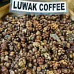 فروش بهترین دانه قهوه کوپی لواک