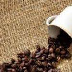 پخش آنلاین دانه قهوه کاستاریکا