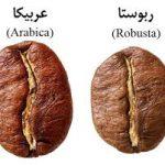 فروش عمده دان قهوه عربیکا