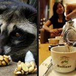 بازار فروش دانه قهوه کوپی لواک (Kopi Luwak)