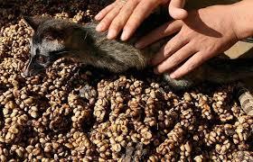 عرضه با کیفیت دانه قهوه کوپی لواک (Kopi Luwak)