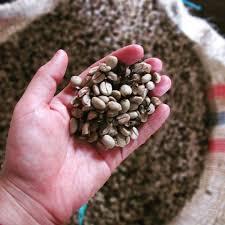 پخش بهترین دانه قهوه کلمبیا