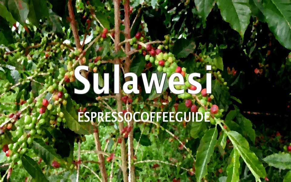قهوه سولاوسی توراجا - قهوه اندونزی