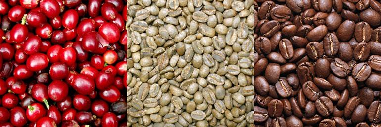 دانه قهوه خام