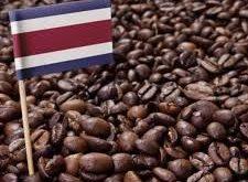 فروش دانه قهوه مرغوب کشور کاستاریکا