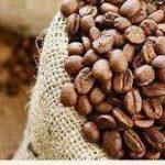 فروش دانه قهوه با کیفیت کشور کاستاریکا