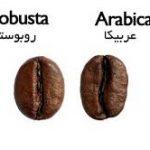 فروش بهترین دانه قهوه کشور اندونزی