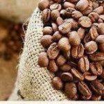 فروش با کیفیت دانه قهوه کشور کلمبیا