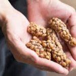 دانه قهوه با کیفیت کوپی لواک (Kopi Luwak)