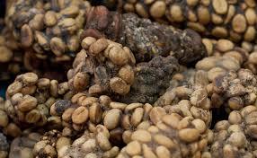 خرید دانه قهوه مرغوب کوپی لواک (Kopi Luwak)