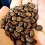 پخش انواع دانه قهوه اندونزی