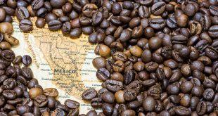 دانه قهوه مکزیک