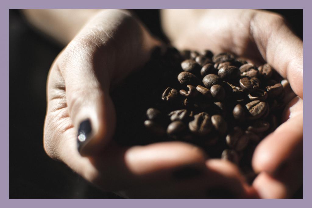 جمع آوری دانه قهوه