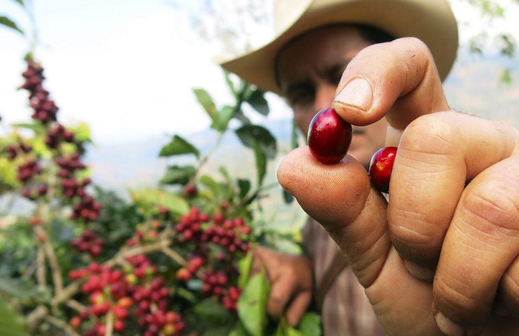 خشک کردن دانه قهوه
