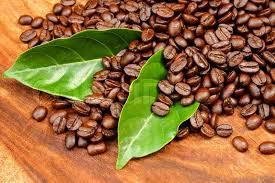خرید و فروش دانه قهوه