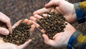 فروش قهوه کنیا اصل