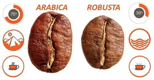 تولید قهوه درجهیک