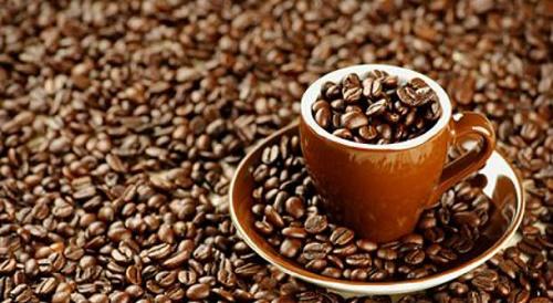 تولید قهوه اصل