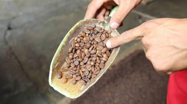 فروش عمده انواع قهوه مکزیک