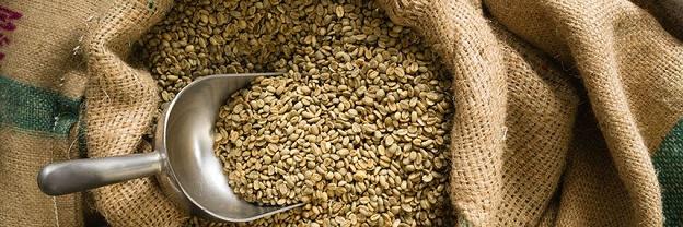فروش عمده قهوه سبز