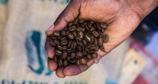 خرید قهوه اتیوپی