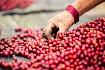 خرید قهوه گواتمالا