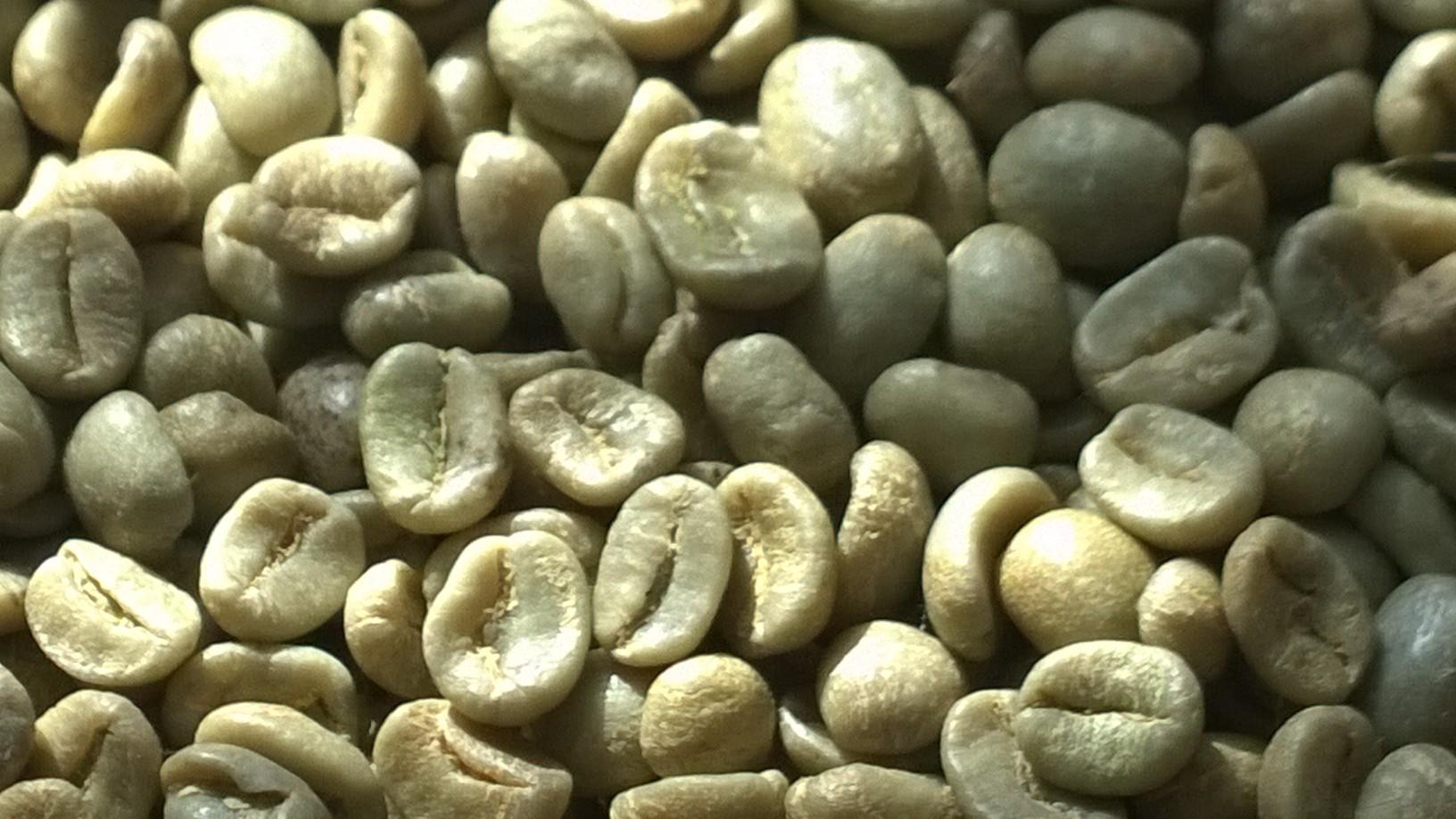 فروش قهوه سبز عمده