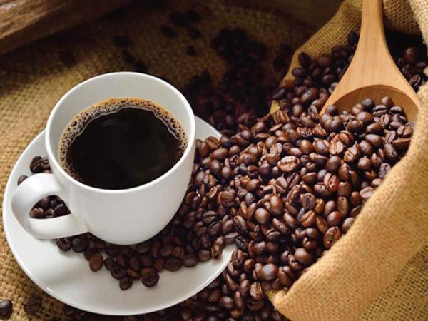 بازار خرید انواع  قهوه پی بی درجه یک