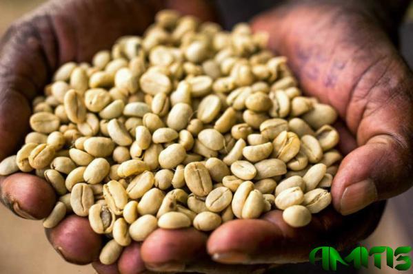عوامل موثر بر قیمت قهوه اتیوپی
