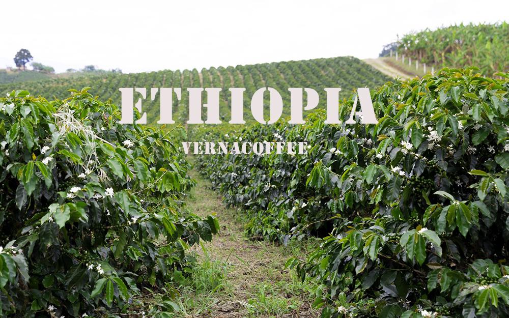 قهوه اتیوپی سیدامو