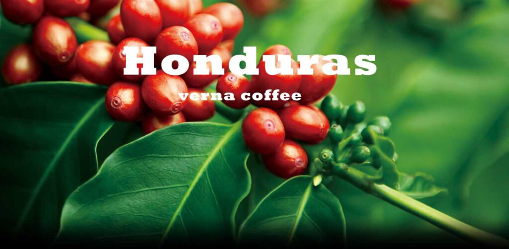 قهوه هندوراس - قهوه سیراف