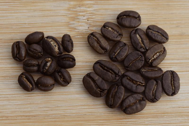 تفاوت در رست، طعم، و عطر - قهوه پی بی عربیکا هند